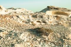 Hügel des weißen Sandsteins mit Elementen der Flora in der Natur Lizenzfreie Stockbilder