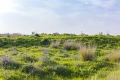 Hügel des wilden Grases mit roten Mohnblumen und Blendungssonnenlicht Lizenzfreies Stockfoto