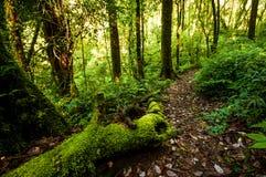 Hügel-Immergrün-Wald Lizenzfreie Stockbilder