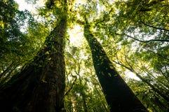 Hügel-Immergrün-Wald Lizenzfreie Stockfotografie