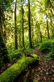 Hügel-Immergrün-Wald Lizenzfreie Stockfotos