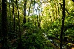Hügel-Immergrün-Wald Stockbilder