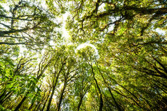 Hügel-Immergrün-Wald Lizenzfreies Stockfoto