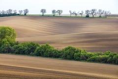 Hügel mit Bäumen in der Tschechischen Republik im Frühjahr Lizenzfreie Stockbilder