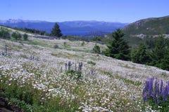 Hügel mit Blumen Lizenzfreies Stockbild