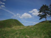 Hügel mit Kiefer Lizenzfreies Stockfoto