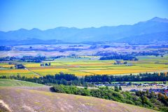 Hügel mit trockenem Gras Lizenzfreie Stockbilder