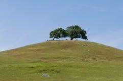 Hügel mit zwei Bäumen Stockfotografie