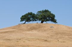 Hügel mit zwei Bäumen Lizenzfreie Stockfotos