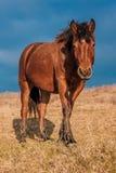 Hügel-Pferd Lizenzfreies Stockfoto