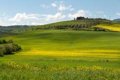 Hügel in Toskana Stockbild