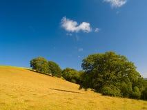 Hügel und Bäume am Sommer Stockbild