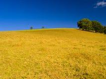 Hügel und Bäume am Sommer Lizenzfreies Stockfoto