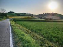 Hügel- und Sonnenblumenpanorama Lizenzfreies Stockbild