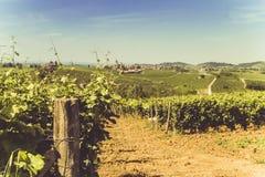 Hügel und Weinberge in der heißen Jahreszeit Lizenzfreie Stockbilder