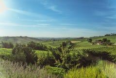 Hügel und Weinberge in Sunny Day Stockfotos
