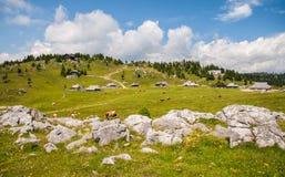 Hügel Velika Planina, Slowenien Lizenzfreies Stockbild