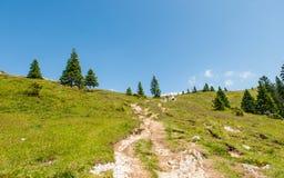 Hügel Velika Planina, Slowenien Stockbilder