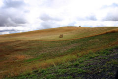 Hügel von Palouse Lizenzfreie Stockbilder