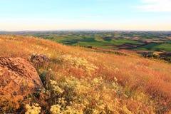 Hügel von Palouse mit wilden Blumen Lizenzfreie Stockbilder