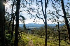 Hügel-Weg-Landschaft stockfotos