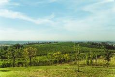 Hügel, Wolken und grüne Weinberge Stockbilder