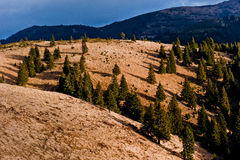 Hügelbäume Stockfoto
