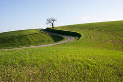 Hügelige Landschaft Lizenzfreie Stockfotos