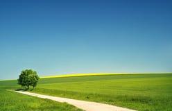 Hügelige Landschaft am Sommer Lizenzfreie Stockbilder