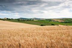 Hügelige Landschaft von Le Marche, Italien Stockfoto