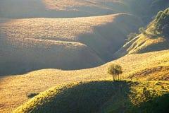Hügelige Savanne am Fuß eines Berges lizenzfreie stockfotografie