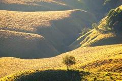 Hügelige Savanne am Fuß eines Berges stockfoto