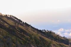 Hügelige Wiese um Berg Rinjani Stockfoto