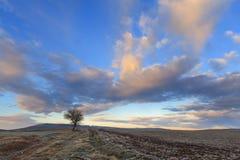 Hügelige Winterlandschaft Zwischen Apulien und Basilikata: einsamer Baum beherrscht durch Wolken bei Sonnenuntergang Italien Stockfotografie