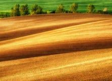 Hügeliges Feld Ränge von landwirtschaftlichen Kulturen auf dem Feld Stockfotografie