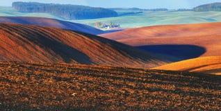 Hügeliges Feld Ränge von landwirtschaftlichen Kulturen auf dem Feld Lizenzfreie Stockfotos