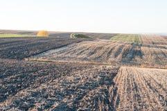 Hügeliges Herbstfeld Lizenzfreie Stockfotografie