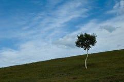 Hügellandschaft Stockbild