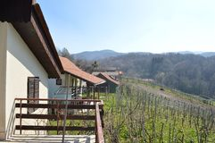 Hügelweinberge Stockfotos