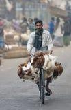 Hühner auf einem Fahrrad Stockfotografie