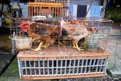 Hühner in einem Käfig Stockfotos