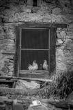 Hühner im Kaninchenstall Lizenzfreies Stockbild