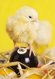 Hühner u. Billiarde Stockfotografie