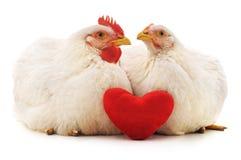 Hühner und Herz stockfoto