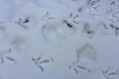 Hühnerabdrücke im Schnee lizenzfreies stockbild