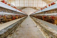 Hühnerbauernhof Lizenzfreies Stockbild