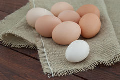 Hühnerei stockbilder