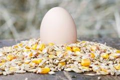 Hühnerei Lizenzfreies Stockfoto