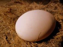 Hühnerei Stockfotografie