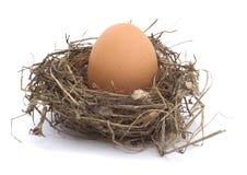 Hühnerei in einem Nest stockfoto